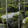 Bosque de montaña Noruega