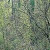 Bosque de ribera primavera
