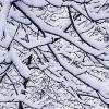 Nogal nevado invierno