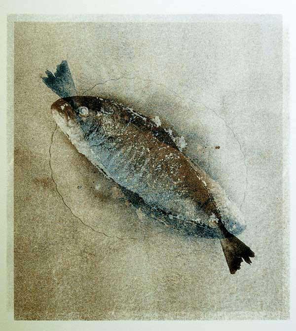sardina.jpg